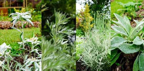 Jardin d 39 hubert for Plantes decoratives jardin
