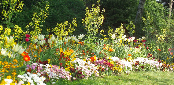 scenery spring pictures fleurs de printemps planter. Black Bedroom Furniture Sets. Home Design Ideas