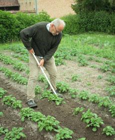 Jardin d 39 hubert - Butter pomme de terre ...