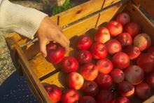 Jardin d 39 hubert jardins des fontaine - Conserver pommes coupees ...