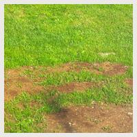 Jardin d 39 hubert for Entretien jardin obligation