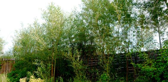 Jardin d 39 hubert - Haie champetre persistant ...