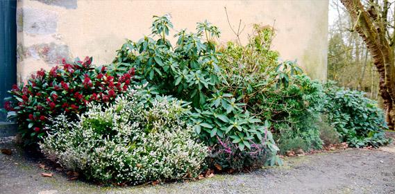 Massif Fleurs Et Arbustes – Idée d'image de fleur