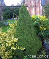 Jardin d 39 hubert for Sapin d ornement jardin