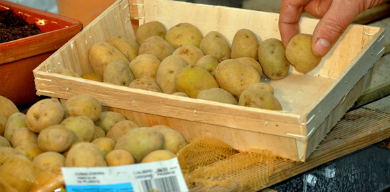 Jardin d 39 hubert - Faire germer des pommes de terre ...