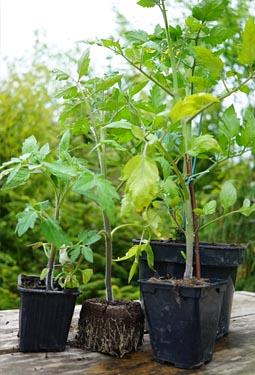 Jardin d 39 hubert jardins des fontaine - Quand planter tomates pleine terre ...
